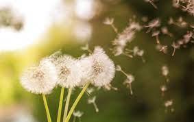 allergie-pollen-cernes